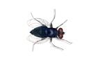 termites sydney