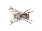 termite pest inspection