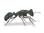sydney pest inspections